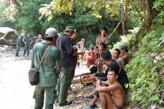 KLHK tangkap belasan pembalak liar di hutan lindung Gunung Bentarang
