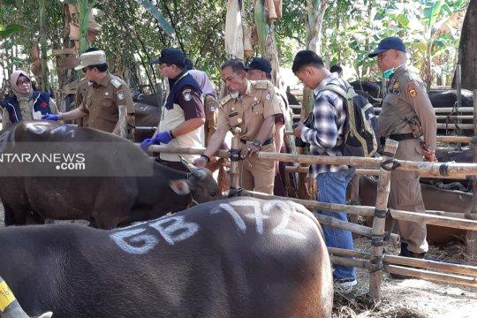 2.458 hewan kurban di Makassar sudah diperiksa kelayakannya