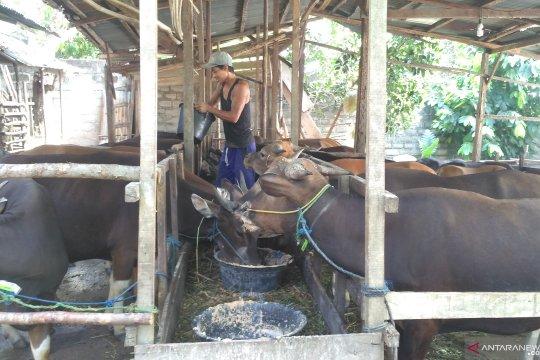 Penjualan hewan qurban di Jambi menurun
