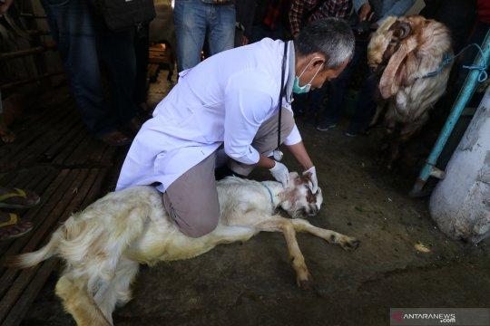Pakar: Kebersihan pemotongan hewan kurban untuk mencegah bakteri