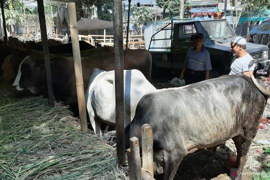 Pedagang pastikan kesehatan hewan kurban selalu dijaga