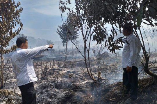 BMKG: Angin kencang pemicu kebakaran cepat meluas di Aceh