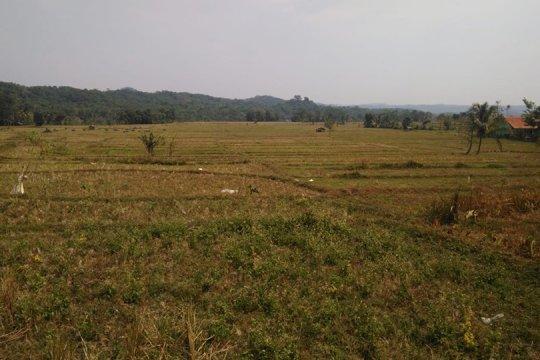 2.760 hektare sawah di Lebak kekeringan, khawatir gagal panen meluas