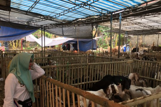 Pedagang hewan kurban di Jaktim keluhkan sepi pembeli