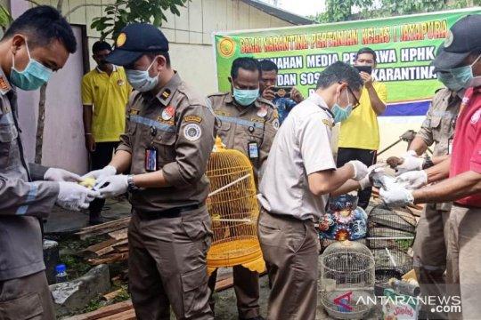 Balai Karantina Pertanian Jayapura musnahkan hewan-tumbuhan ilegal