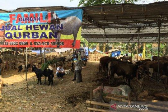 Pedagang hewan kurban keluhkan sulitnya dapatkan pakan ternak