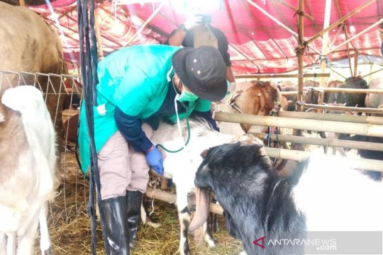 Sudin KPKP Jakarta Utara periksa hewan kurban di 52 tempat penampungan