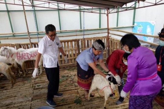 159 petugas Sudin KPKP Jakbar pantau kesehatan hewan kurban