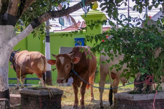 402 relawan lakukan pengawasan pemotongan hewan kurban di Aceh