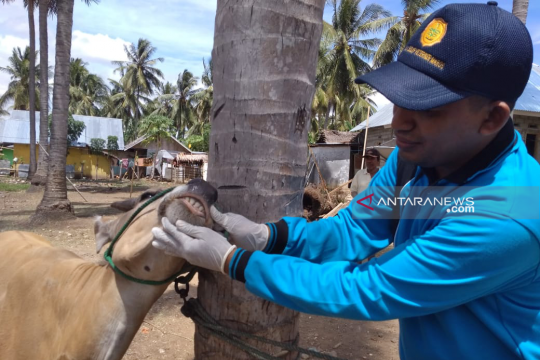 Di Desa Tabongo Timur Gubernur Gorontalo shalat Idul Adha