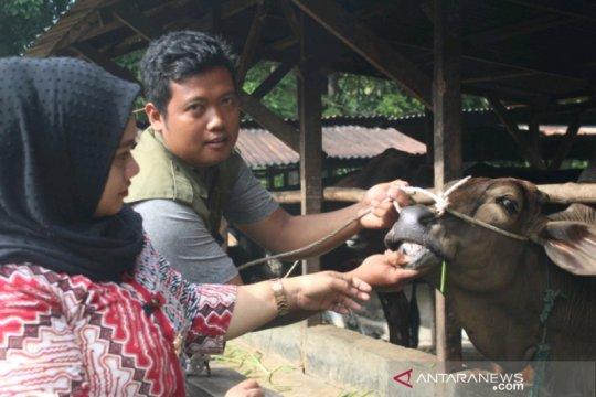 Pemkot Palembang jamin hewan kurban bebas penyakit