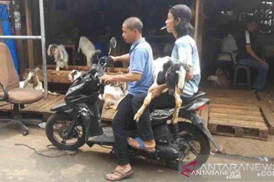 Harga jual kambing di Tanah Abang capai Rp8 juta per ekor