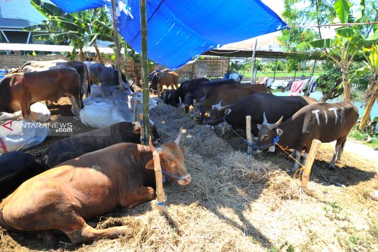 Buang limbah hewan kurban sembarangan di Surabaya dikenai sanksi