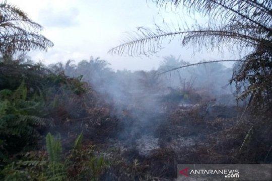 BMKG: hujan padamkan kebakaran lahan di Aceh