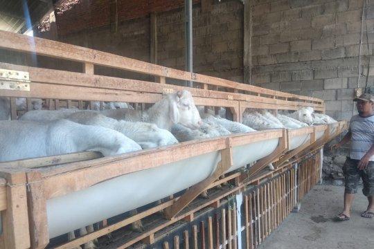 Dompet Dhuafa berdayakan peternak lokal penuhi kebutuhan hewan kurban