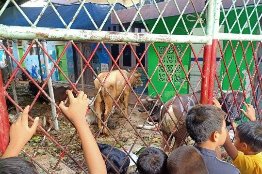 Pejabat sumbang sapi bagi korban kebakaran Manggarai
