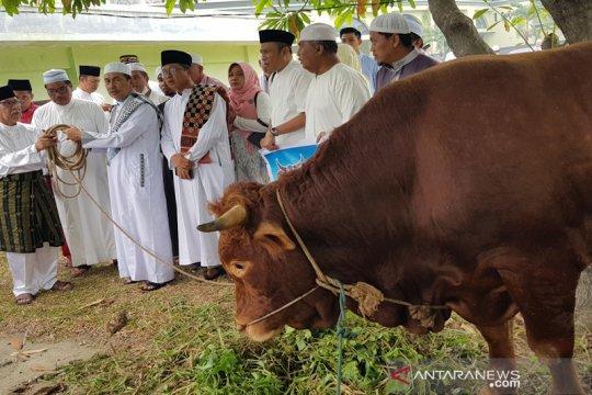 "Presiden Jokowi kurban sapi ""limosin"" 1 ton di Pekanbaru"