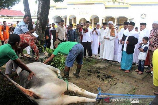 Pemotongan hewan kurban di masjid Alfatah Ambon berlangsung tiga hari