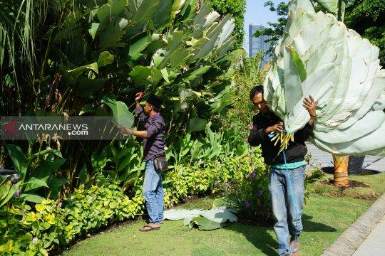 Risma bagikan daun pisang pengganti plastik ke sejumlah masjid
