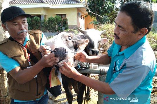 Disnak Keswan Jateng gandeng PDHI cek kondisi daging kurban