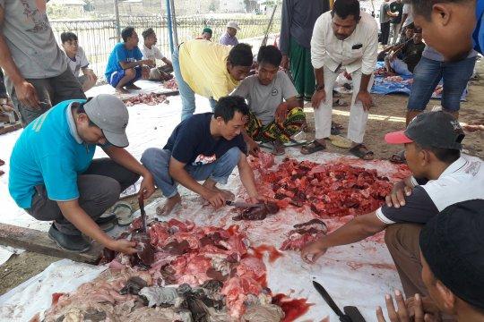 Distan Banten temukan cacing hati di sejumlah daging hewan kurban
