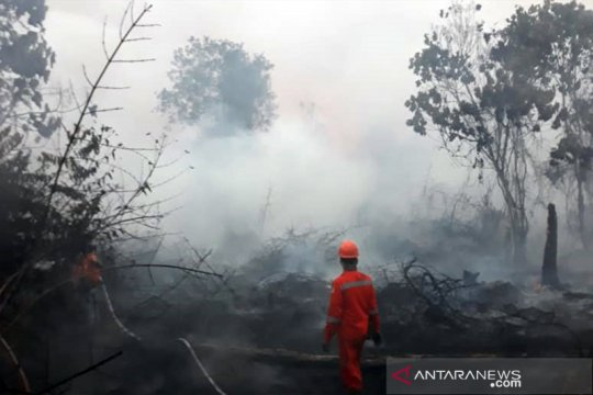 Kebakaran di TN Tesso Nilo Riau terjadi sporadis di area perluasan