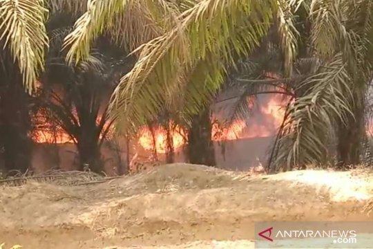 Aktifitas ilegal driling sebabkan kebakaran di tahura