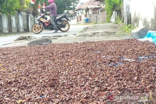 Harga cengkih di Manado turun menjadi Rp76.000/kg