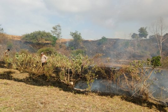 200 hektare lahan HGU di Bima terbakar