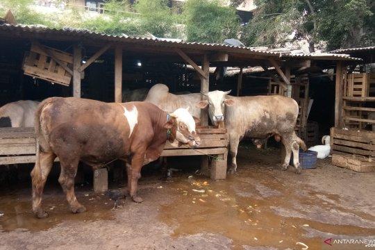 Dharma Jaya catat peningkatan penjualan hewan kurban