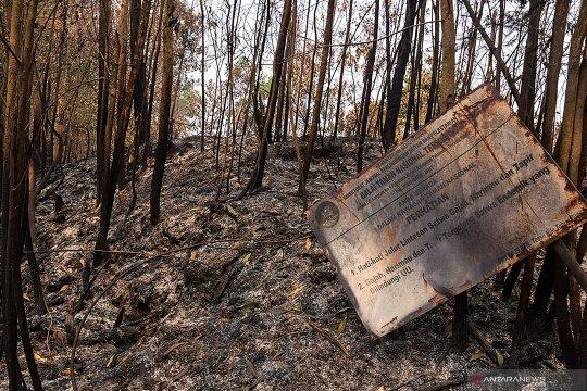 Mahasiswa Riau desak aparat usut kebakaran Taman Nasional Tesso Nilo