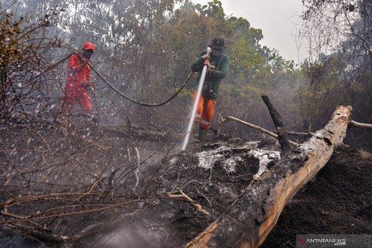 Selamatkan Taman Nasional Tesso Nilo