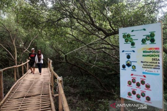 Kunjungan wisata hutan mangrove Muara Gembong tak terdampak minyak