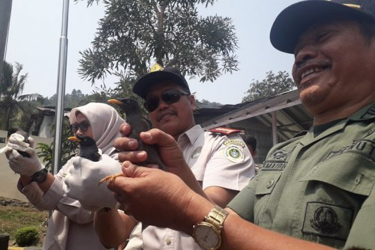 Balai Karantina Lampung gagalkan pengiriman 910 ekor satwa liar
