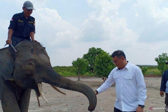 Kondisi gajah asal Lahat yang dipindahkan karena konflik  baik