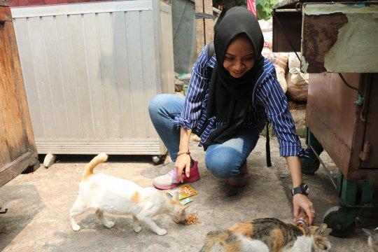 Cahaya bagi kucing jalanan Ibu Kota