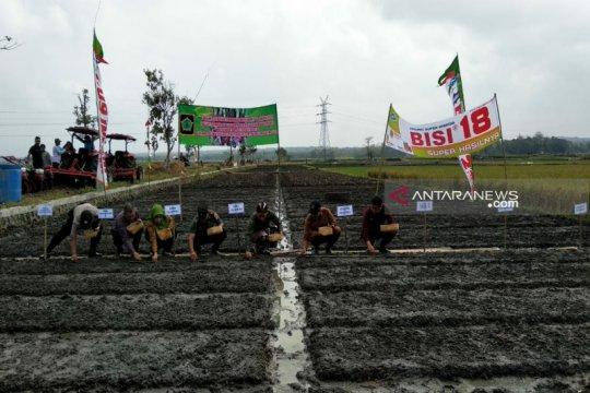 Pemkab Kulon Progo targetkan produksi bawang merah 6.135 ton