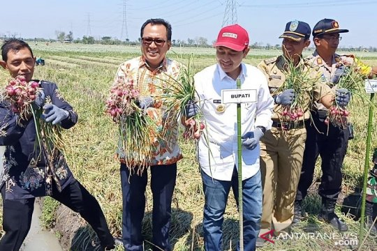 BI dukung pemanfaatan bahan organik untuk penanaman bawang merah