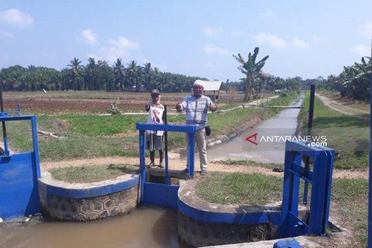 Dampak kemarau, debit air irigasi di Mukomuko-Bengkulu berkurang