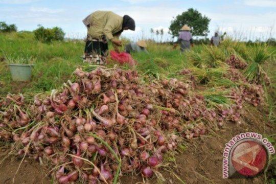 Pemkab Aceh Tengah Targetkan Lumbung Bawang Merah Gayo