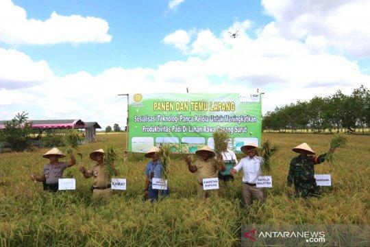 Petani nikmati hasil panen padi unggul setahun dua kali