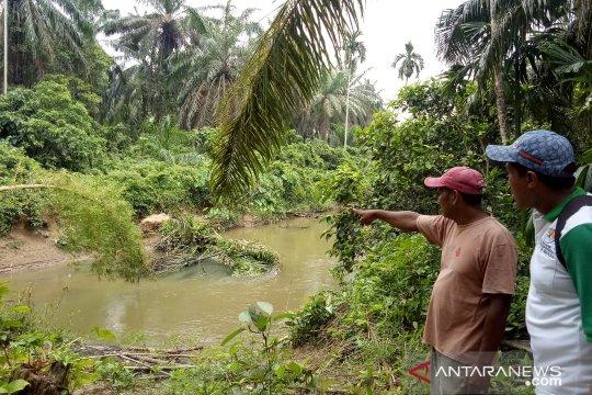 Pengusikan habitat picu serangan buaya di Sungai Batang Anggang
