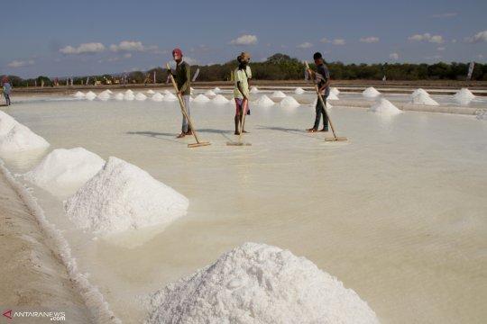 Harapan dan ambisi menjadikan NTT pemasok utama garam nasional