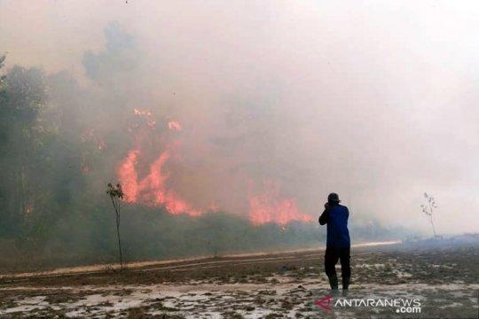 Kebakaran hutan terus bermunculan di Taman Nasional Tesso Nilo