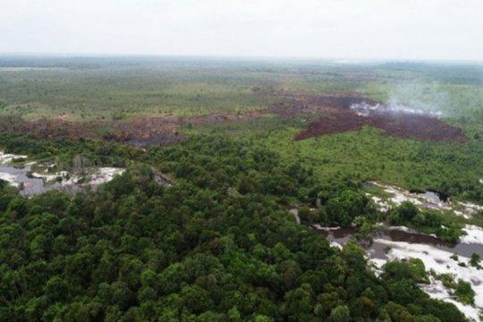 Lahan terbakar di Kotim diduga hutan tanaman industri