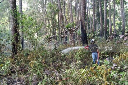 Kebakaran nyaris habiskan hutan mahoni di TNKS Rejang Lebong