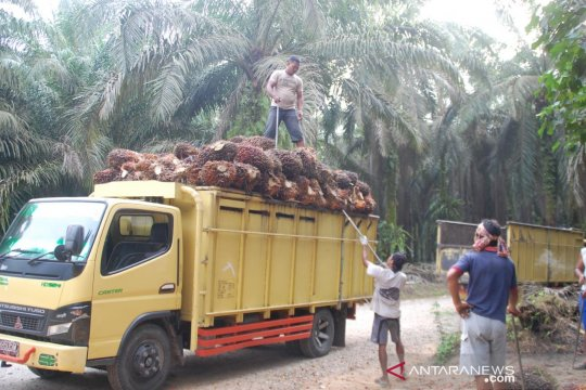 Masyarakat sejahtera dan kawasan berkembang pesat berkat sawit