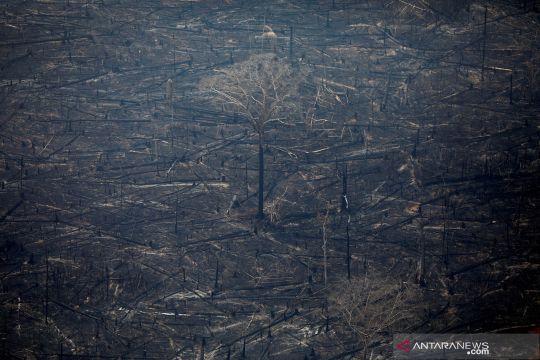 G7 tawarkan bantuan 20 juta dolar AS untuk atasi kebakaran Amazon