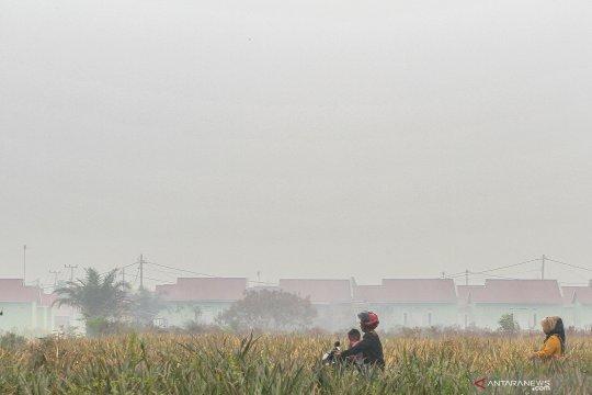 Kampar liburkan pelajar karena kabut asap makin tebal