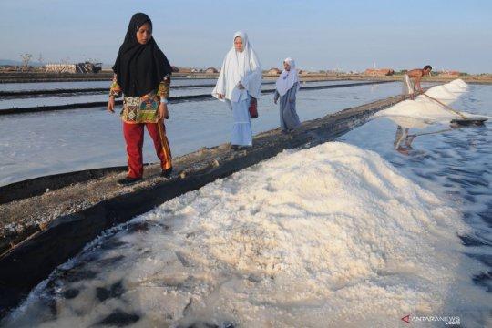 Wisata lahan garam